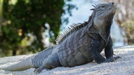 Sobrevivir en una isla es difícil: 80 por ciento de las especies que se extinguen viven en ellas