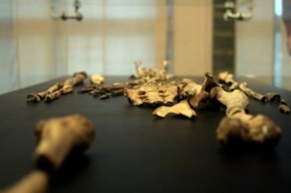 """Estudios forenses en fósiles revelan pistas sobre la muerte de """"Lucy"""", nuestro emblemático ancestro"""