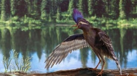 Los antepasados de los pájaros vivieron hace 130 millones de años