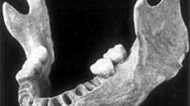Los primeros europeos tuvieron abuelos neandertales