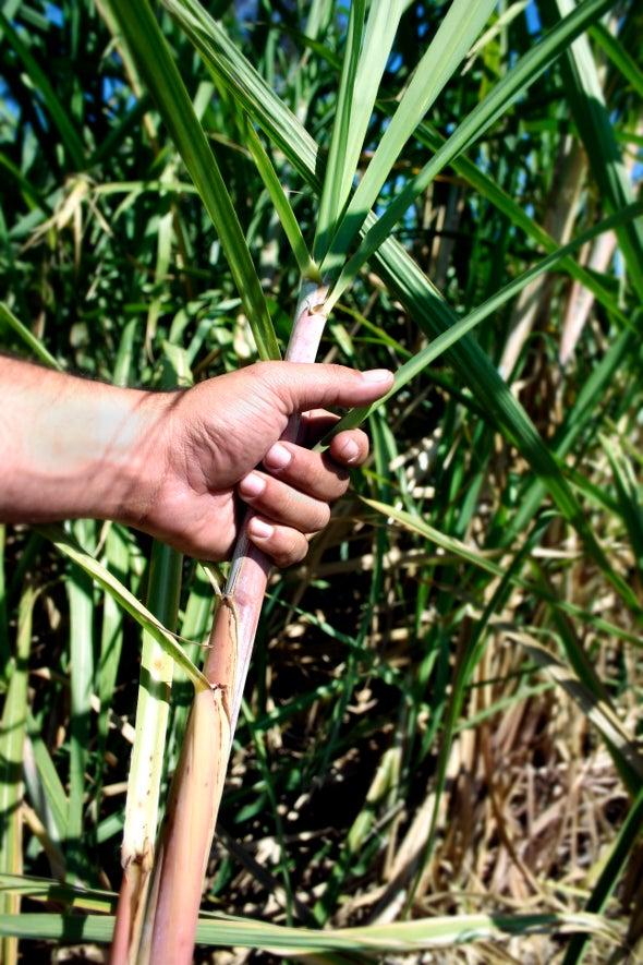 Científicos buscan orígenes de misteriosa enfermedad renal que azota a campesinos centroamericanos
