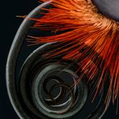 Trompa de mariposa