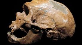 El ADN neandertal contribuye a las diferencias étnicas actuales en la respuesta inmunitaria