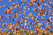 El 8% del patrimonio mundial natural está en peligro crítico