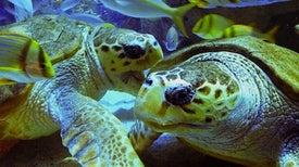 La historia de una tortuga ayuda a promover la conservación del océano