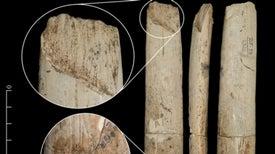 El hombre moderno ya trabajaba el marfil y el hueso hace 30.000 años [con galería de fotos]