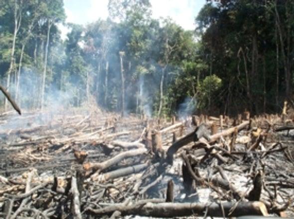 Los árboles de la Amazonia se enfrentan una crisis de extinción, pero aún hay esperanzas