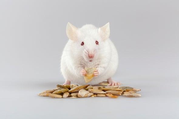 A los ratones borrachos les da hambre atroz