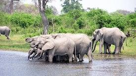 La caza furtiva de elefantes africanos produce pérdidas turísticas millonarias