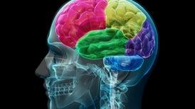 El lado sano del cerebro es crucial para rehabilitarse tras un ictus