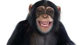 Los simios también interpretan la realidad en positivo