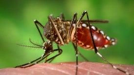 Muchas mujeres brasileñas evitan quedar embarazadas por temor al virus de Zika