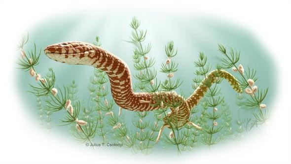 Nuevos fósiles revelan la verdadera edad de las serpientes