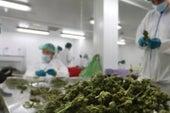 ¿Estamos en una nueva era en la investigación médica con marihuana?