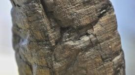 Rayos X descifran los papiros de Herculano sin desenrollarlos