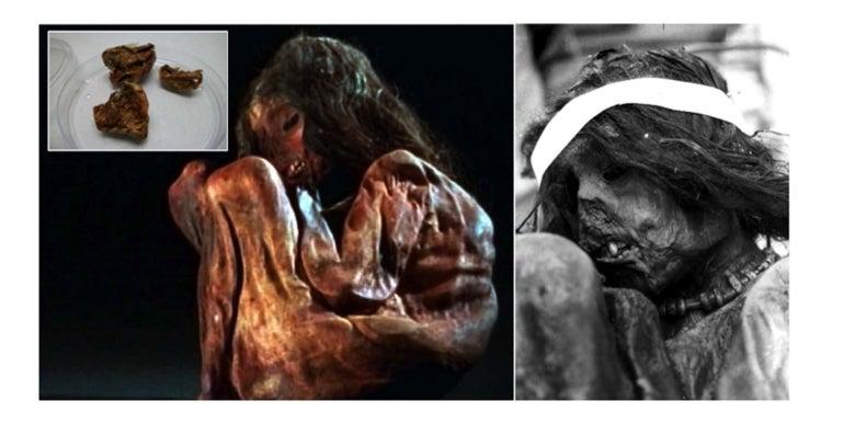 La momia del niño del Aconcagua revela el linaje genético de los incas