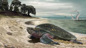 Paleontólogos describen la tortuga marina más antigua conocida hasta ahora