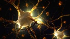 Científicos argentinos descubren cómo las células madre se transforman en neuronas
