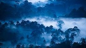 Un 10% de la naturaleza salvaje se ha perdido desde la década de 1990