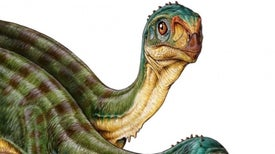 Niño halla en Chile un primo vegetariano del tiranosaurio rex