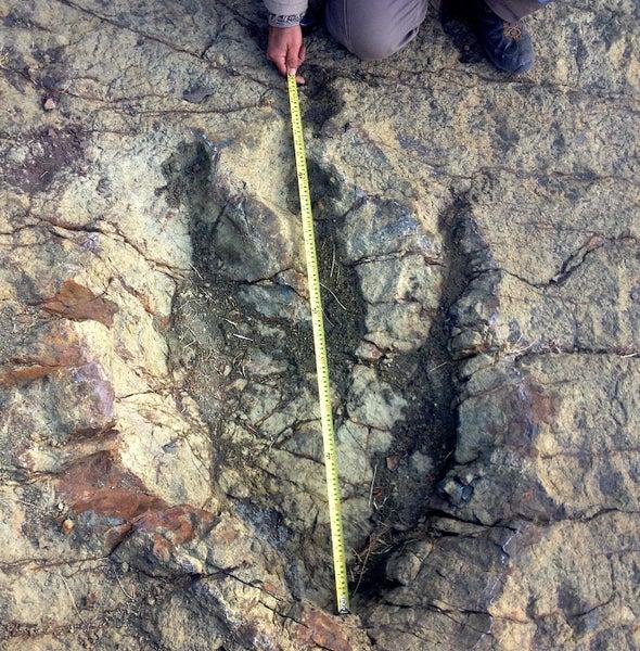 Gigantesca huella de dinosaurio emerge en Bolivia