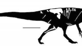 Emerge de la Patagonia argentina un nuevo dinosaurio del grupo de los Megaraptor