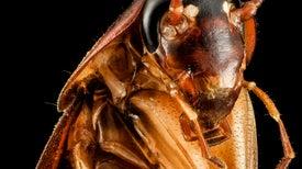 Las cucarachas tienen superpoderes