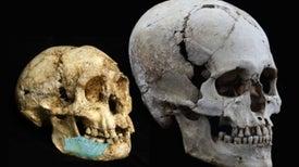 Fósiles dan pistas sobre el tan buscado antepasado de la especie humana más extraña