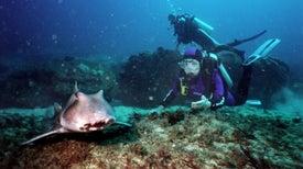 Los tiburones también tienen personalidad