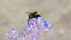 El calor pone en aprietos a las abejas