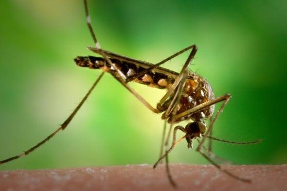Los mosquitos nos salvarán... de los mosquitos
