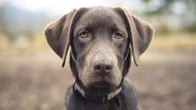 Sobre la inteligencia canina y lo que esta puede decirnos acerca de la nuestra
