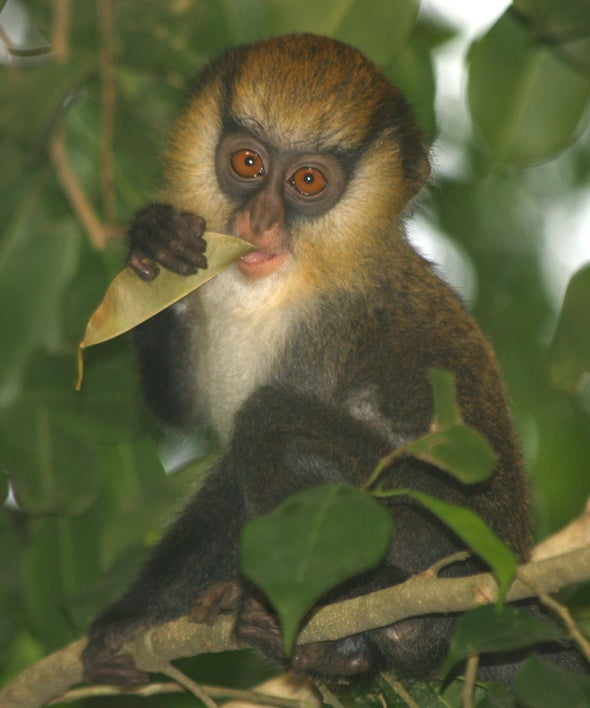 El mono ve y el mono habla