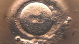 Científicos chinos modifican genéticamente embriones humanos