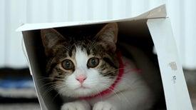 La gravedad mató al gato de Schrödinger