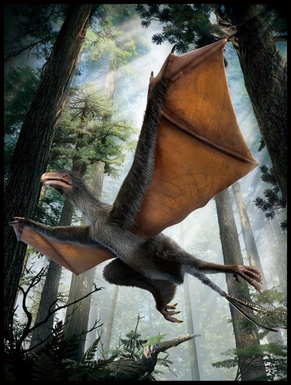 Descubren en China un pequeño dinosaurio con alas de murciélago