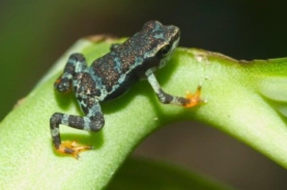 Extinción masiva de ranas a la vista