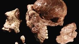 El fósil que reescribió la prehistoria humana