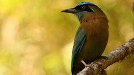 ¿Los monocultivos son enemigos de las aves?