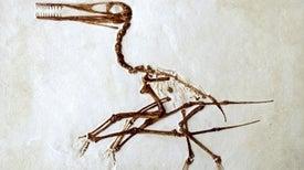 ¿Cómo sabemos la edad de un fósil?