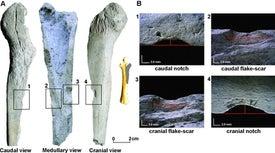 Nueva evidencia apunta a presencia humana en América del Sur hace 14.000 años