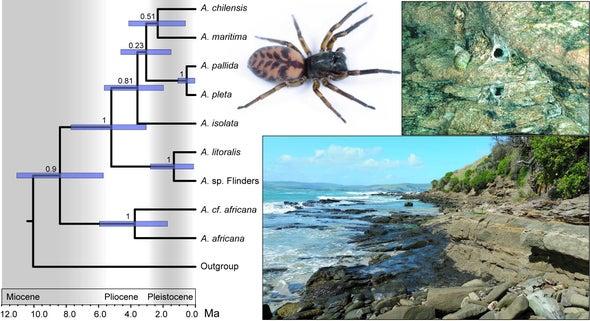 Estas arañas le dieron la vuelta al mundo en ocho millones de años