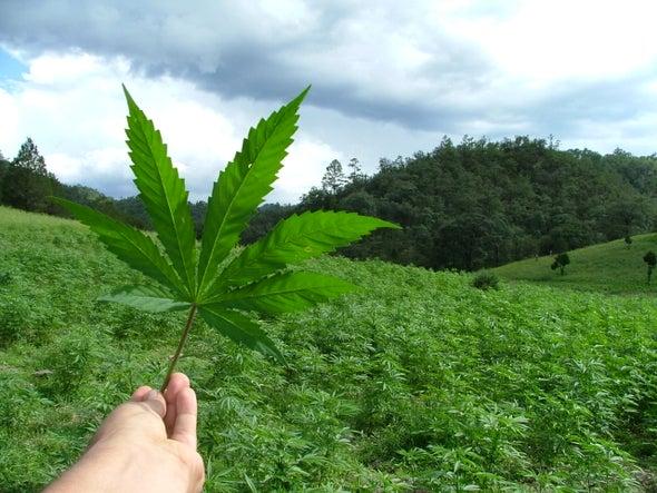 Dabbing: una nueva forma de consumo de la marihuana potencialmente peligroso