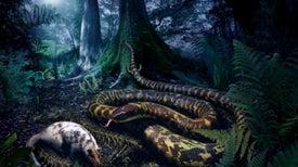 La serpiente primitiva era nocturna... ¡y tenía patas!