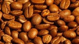 Cambio climático disminuye el rendimiento de las plantaciones de café arábica