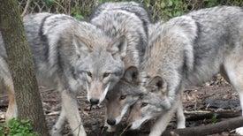 El cambio climático engendra nuevas especies