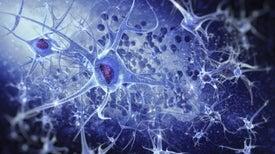 Treinta neuronas contra el dolor