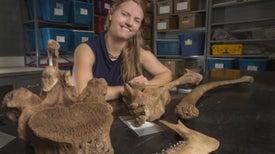 Arqueólogos subacuáticos hallan antiguo yacimiento de carnicerías en Florida