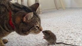 Los animales pequeños viven en cámara lenta