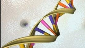 ¿Cuál es la diferencia entre genes, ADN y cromosomas?